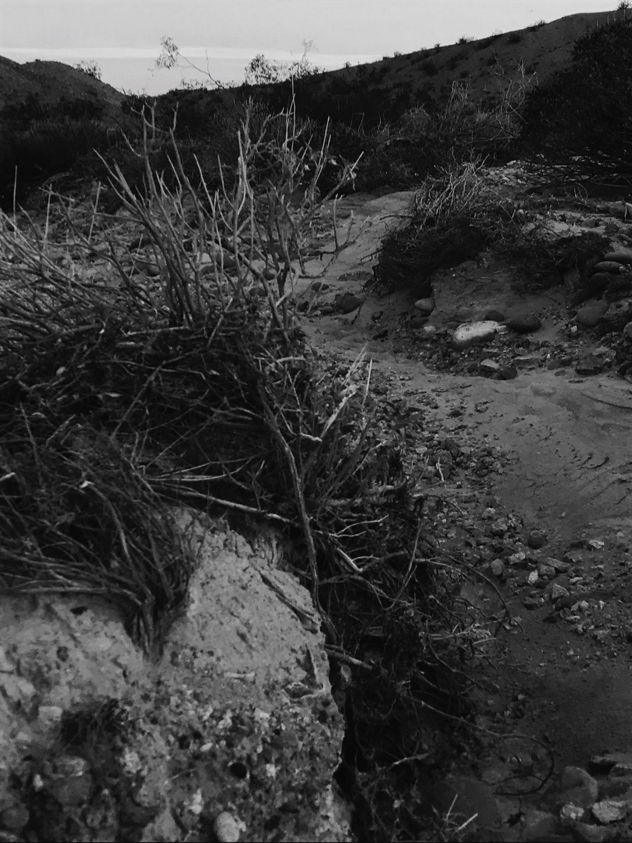 Nature Outdoors Growth Day Plant No People Tranquility Landscape Grass Dry Wash Desert Flora Textures In Nature Black And White Photography