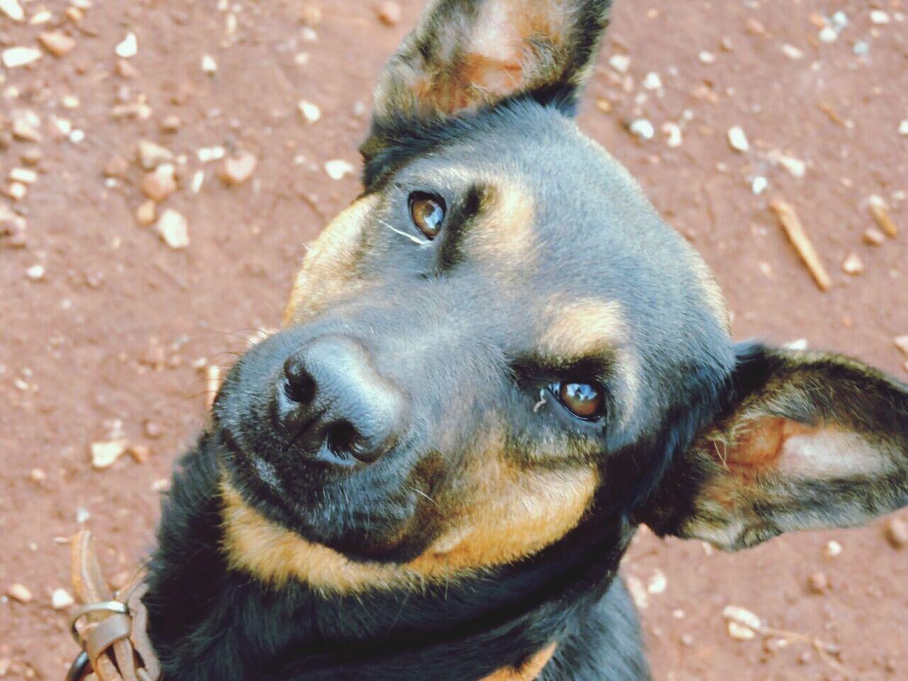 My dog, my puppy, my pet Loveyou♥