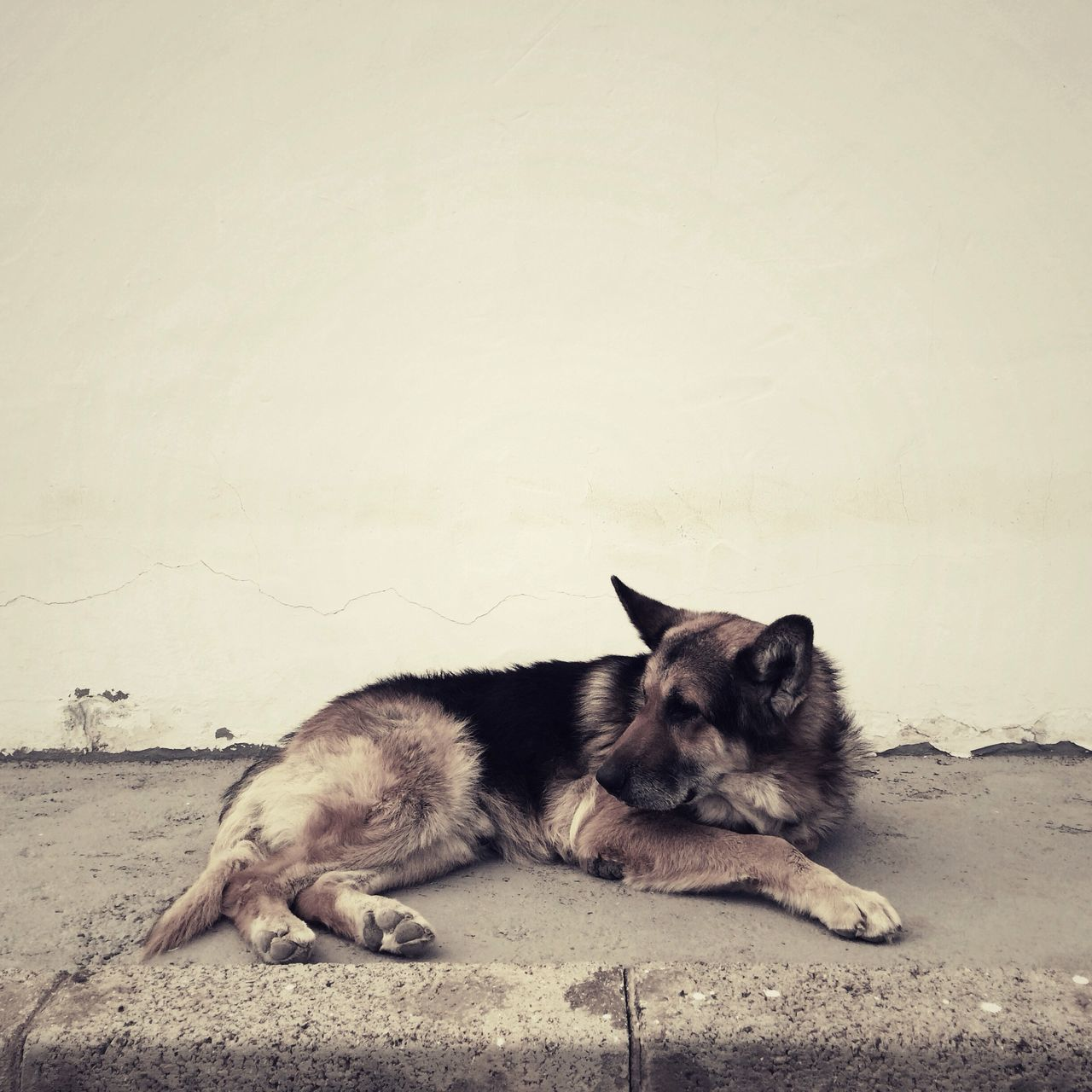 Beautiful stock photos of wolf, Animal Themes, Copy Space, Cracked, Day