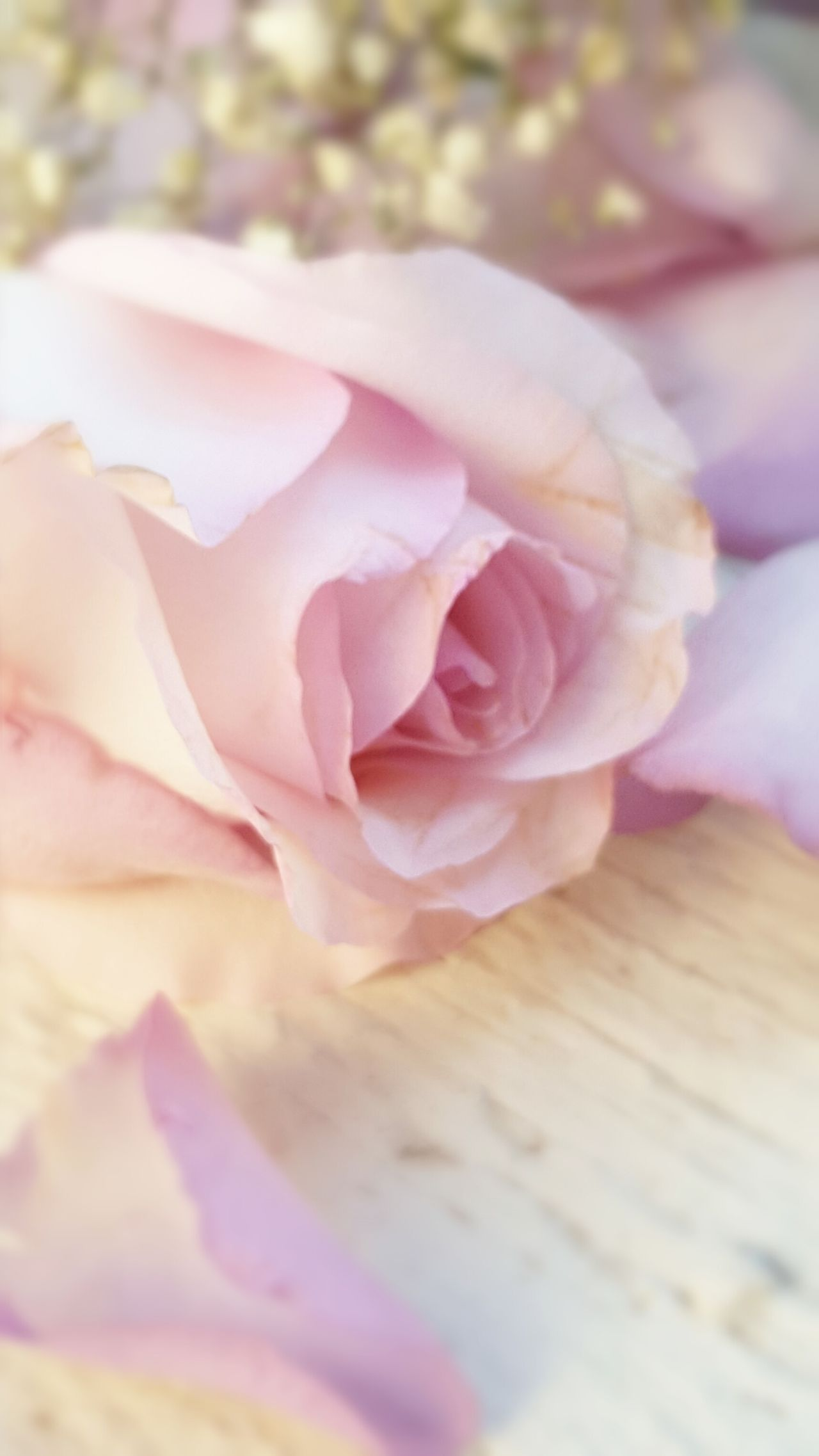 Roses Rose - Flower Rose🌹 Rose Garden Roseporn Roses🌹 Rosa ♡ Rosas Rosas Y Espinas