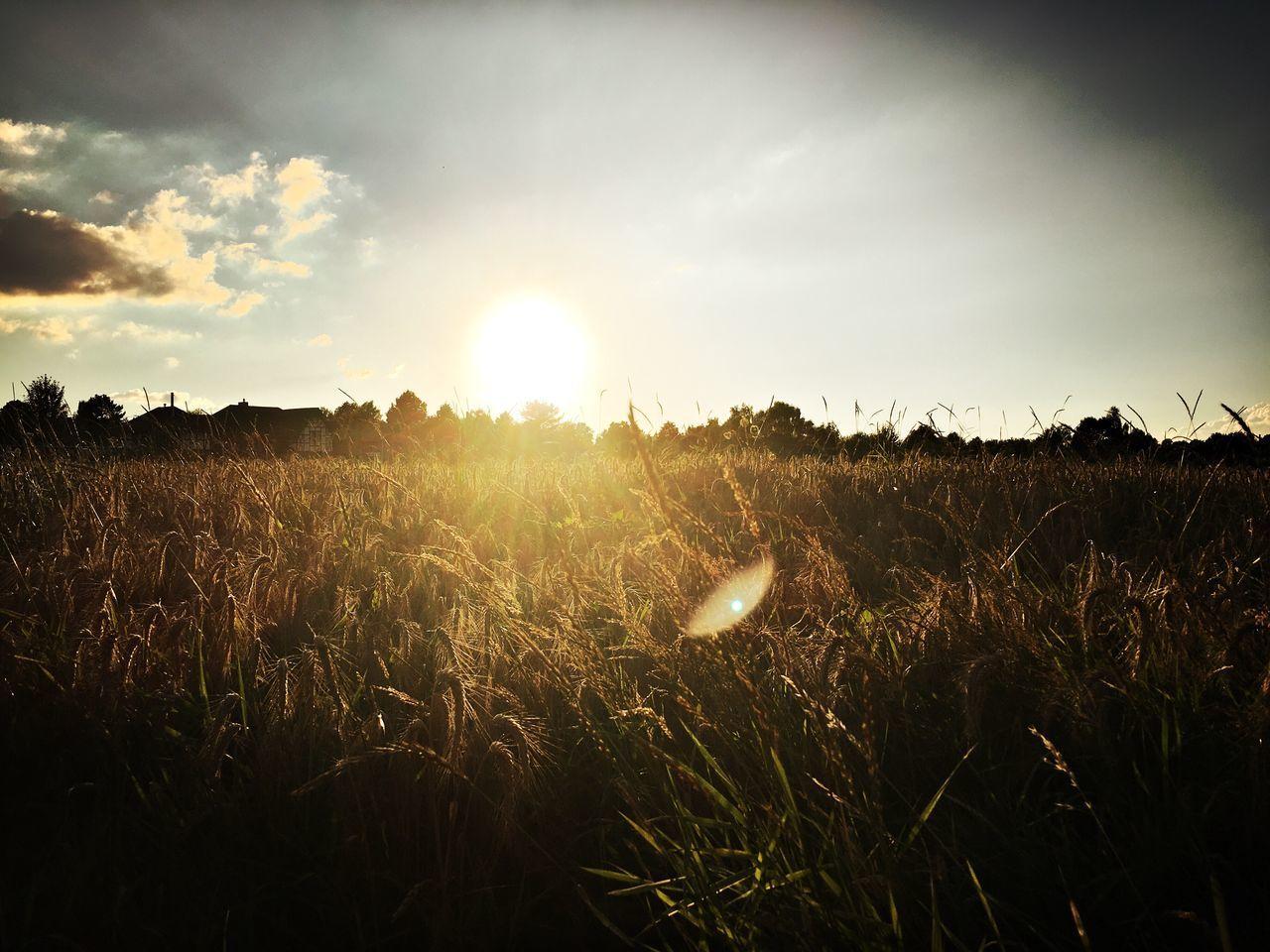 Niederrhein Germany Summer Fields Harvest Time Sunset Sunset #sun #clouds #skylovers #sky #nature #beautifulinnature #naturalbeauty #photography #landscape Summer Summer Sunset Nature Landscape_photography Landscape_Collection Landscape Nature Photography Harvest EyeEm Nature Lover