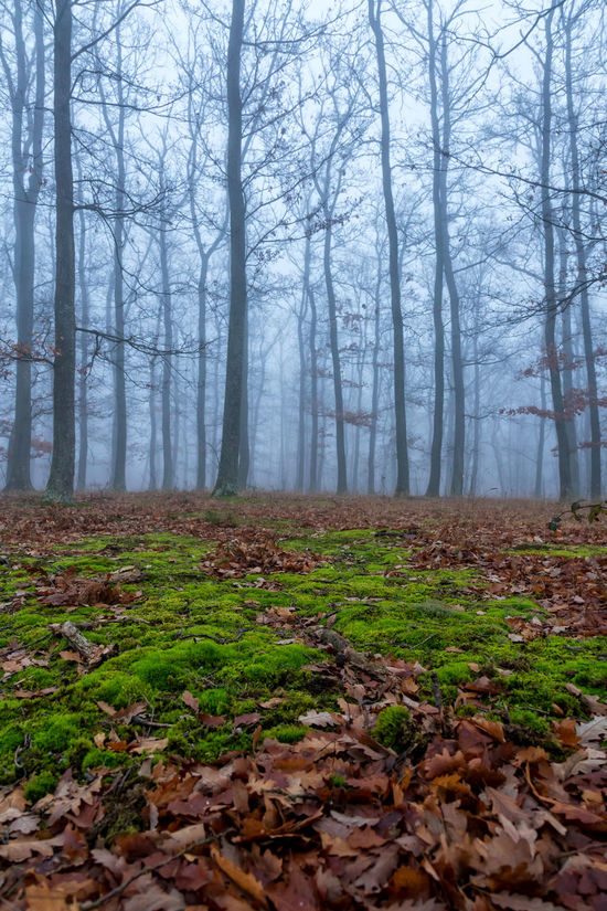 Agriculture Autumn Day Fog Foggy Forest Forestry Green Landscape Leaf Mistic Moss Nature Outdoors Scenics Tree Wood