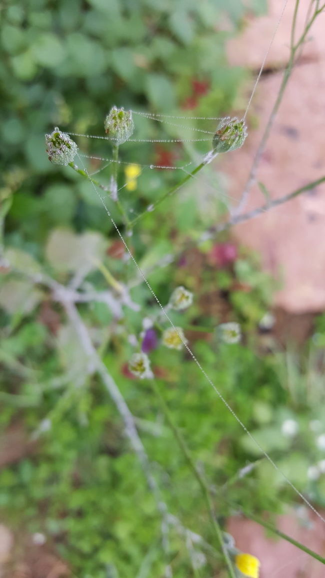 Beauty In Nature Plant Card Design Outdoors Day Autumn Weather Green No People Flowers Rainy Season Autumn Colors Close-up Focus On Foreground Leaf Green Color Drop Detail Gardening Spiderweb Spider Web Drops Nature