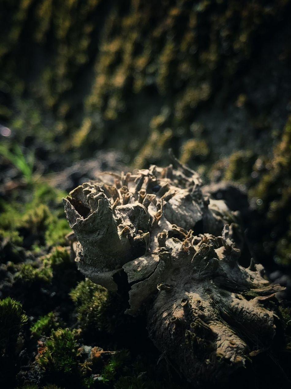 意味不明 EyeEm Nature Lover Close-up IPhoneography Iphone7 Beauty In Nature