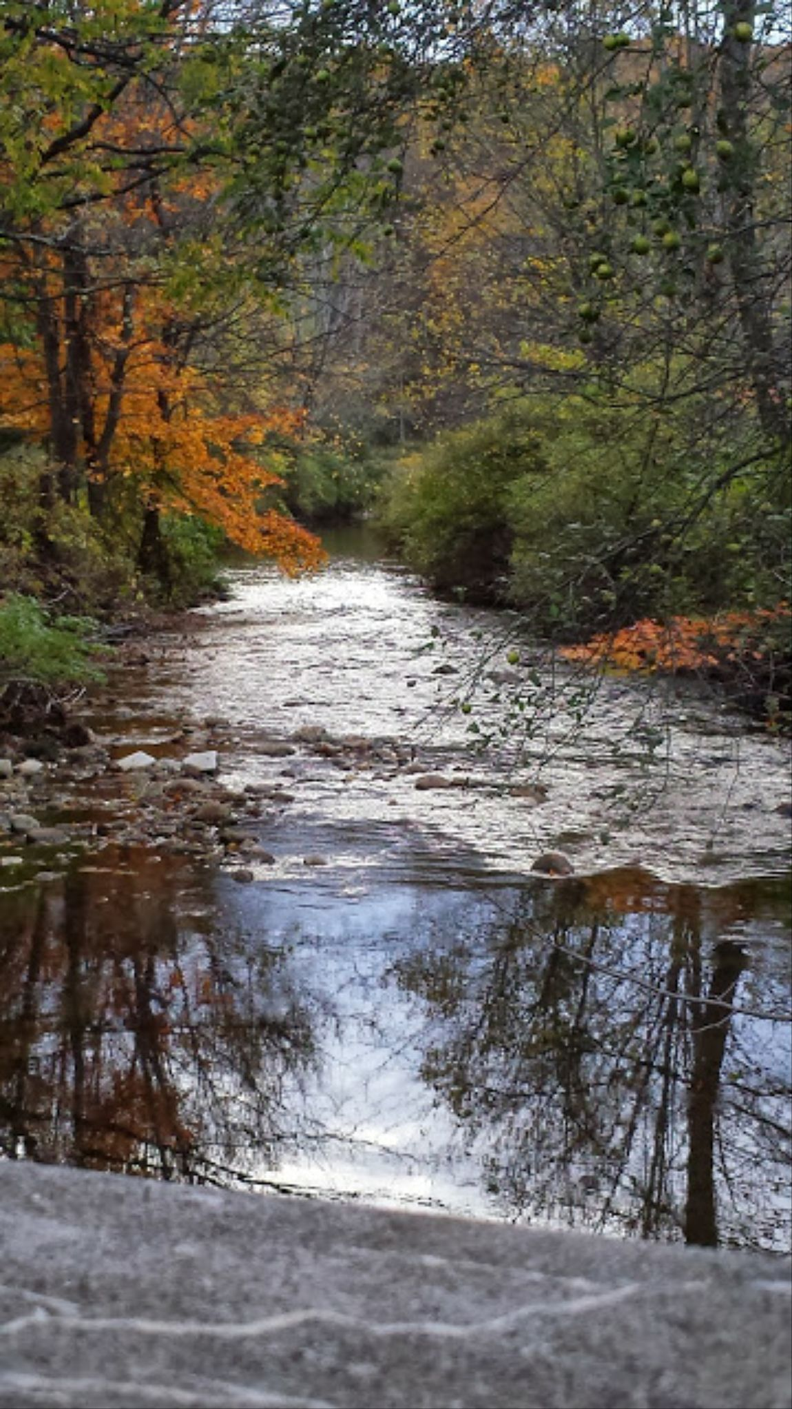 Batten Kill River Fall Colors Riverscape River Flowing I Love Fall My View Water Reflections Open Edit
