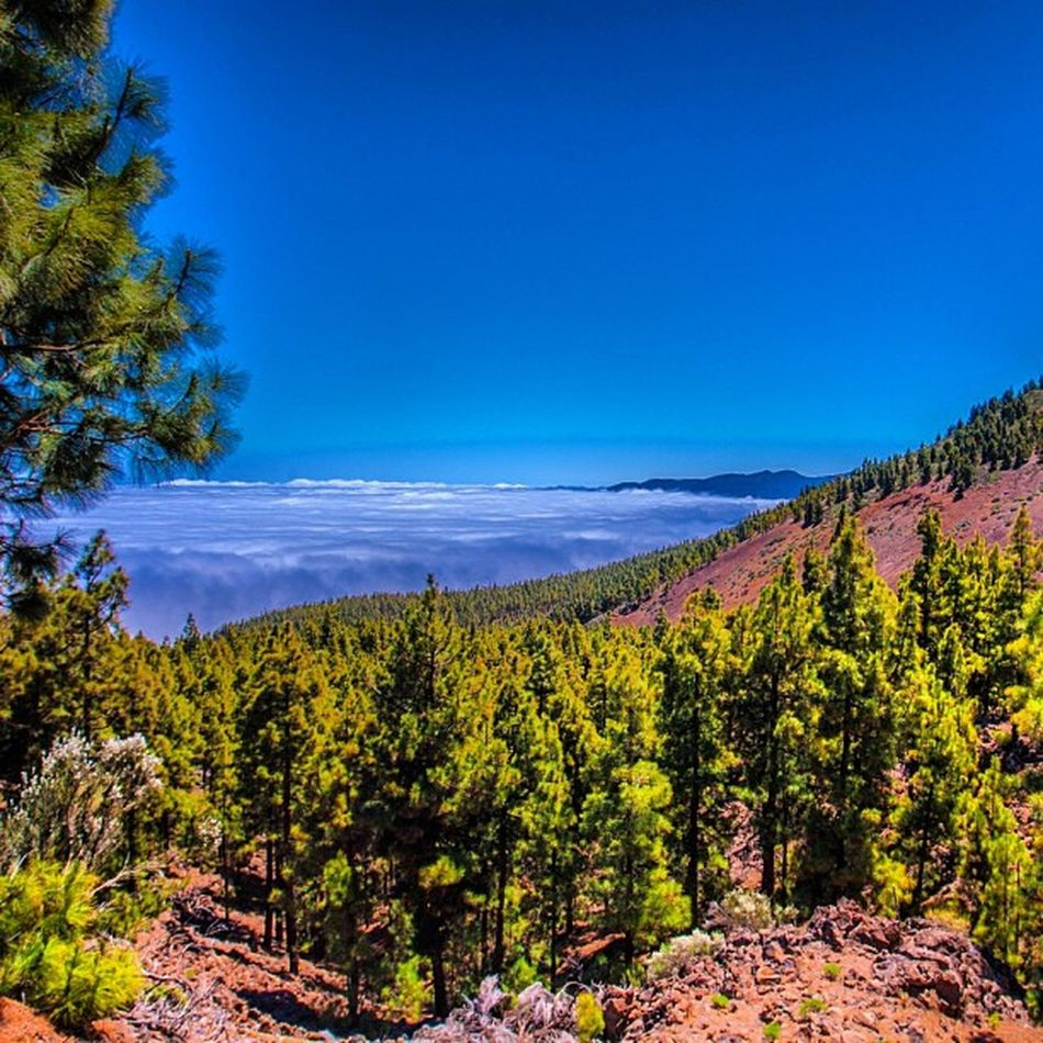 #Beautiful #Teneriffe again #mountain tour with #bluesky #fog and wonderful #nature - Looks so #peaceful Forest Teneriffe Like Teneriffa Trip Puretravel Island Igerspain Peaceful Kanaren Mountain Europe Nofilter Nature Valley Beautiful Bluesky Love Pureglamtv Trees Spg Colors Starwood Fog Nocloud Travel Canary Vacation Spglife