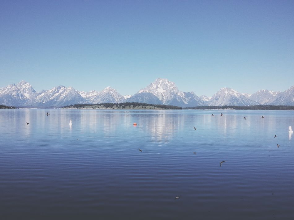I was greeted with an aerial show by a flock of birds at Jackson Lake, Grand Teton National Park. To truly appreciate it you can see the mobile video here. bit.ly/grandteton-birds RoadTripxUSA Grand Teton National Park  Wyoming