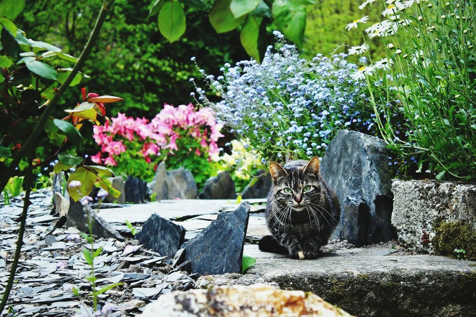 Cat Colors Nature Garden Photography Serenity Flowers Plants Bushes Greenery Pierre Lavender Branches Pebbles