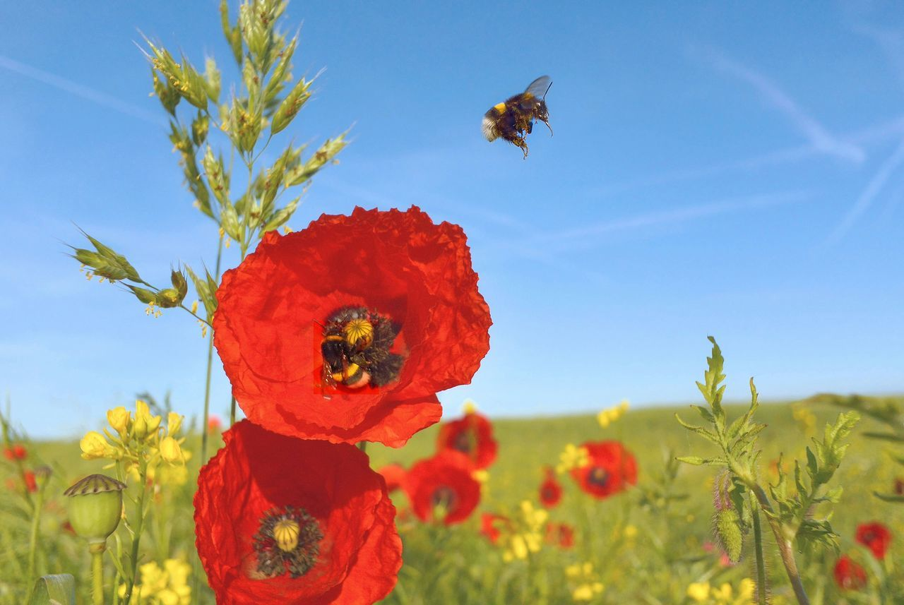 Beautiful stock photos of bee, Beauty In Nature, Bee, Close-Up, Day