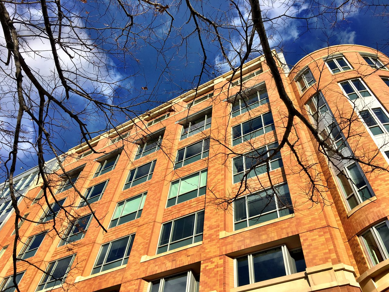 Architecture Bare Branches Bare Tree Brick Building Building Exterior Built Structure Business District City Day Dcfocused Dcphotographer Low Angle View Low Angle View No People Outdoors Politics Residential Building Sky Tree Urban Washington DC Washington, D. C. Window Winter