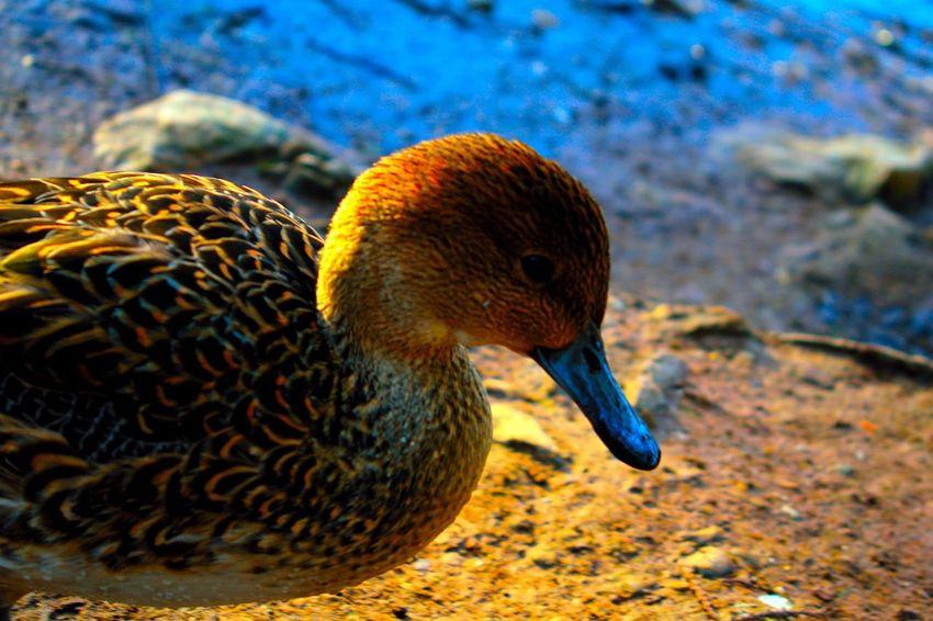 Animal Themes Animal Wildlife Animals In The Wild Beak Beutiful  Bird Close-up Colors Day Lonely Nature No People One Animal Outdoors Sad Sun