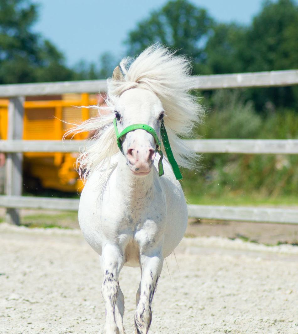 Beautiful stock photos of pony,  Animal Pen,  Animal Themes,  Day,  Domestic Animals