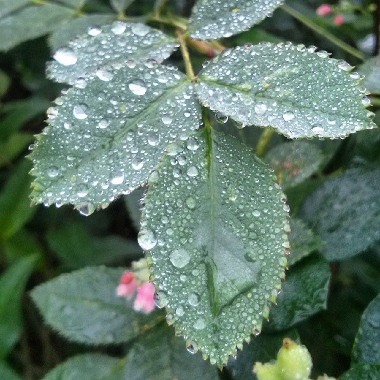 drop, water, leaf, wet, nature, weather, close-up, day, raindrop, no people, green color, beauty in nature, fragility, freshness, growth, outdoors, plant, cold temperature, periwinkle