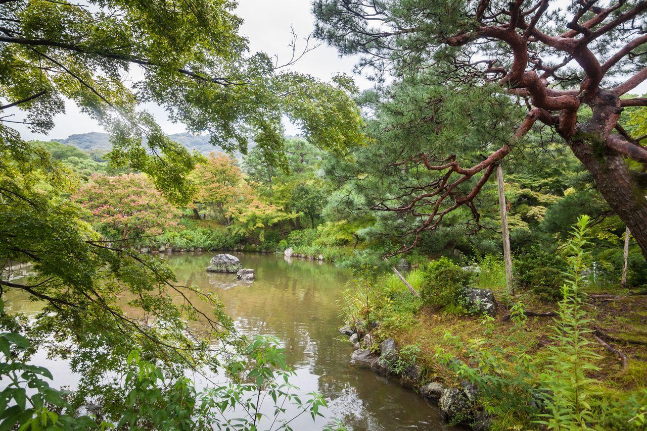 Holiday in Japan - Summer Autumn Transit in Yasaka Shrine Garden, Kyoto Autumn Garden Holiday Japan Kyoto Kyoto,japan Lake Reflection Temple Tree Yasaka Yasaka Shrine Yasaka-jinja Shrine