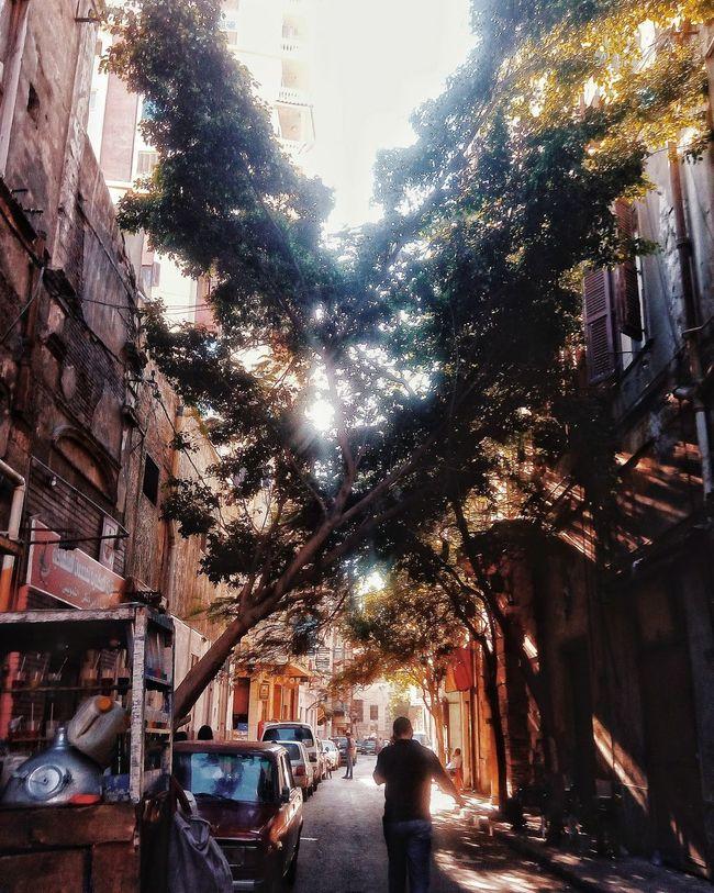 Street Streetphotography People Sunlight Popular Photos Tree Close-up Idea Today ♥ Vesco HTC820 HTC_photography Morning