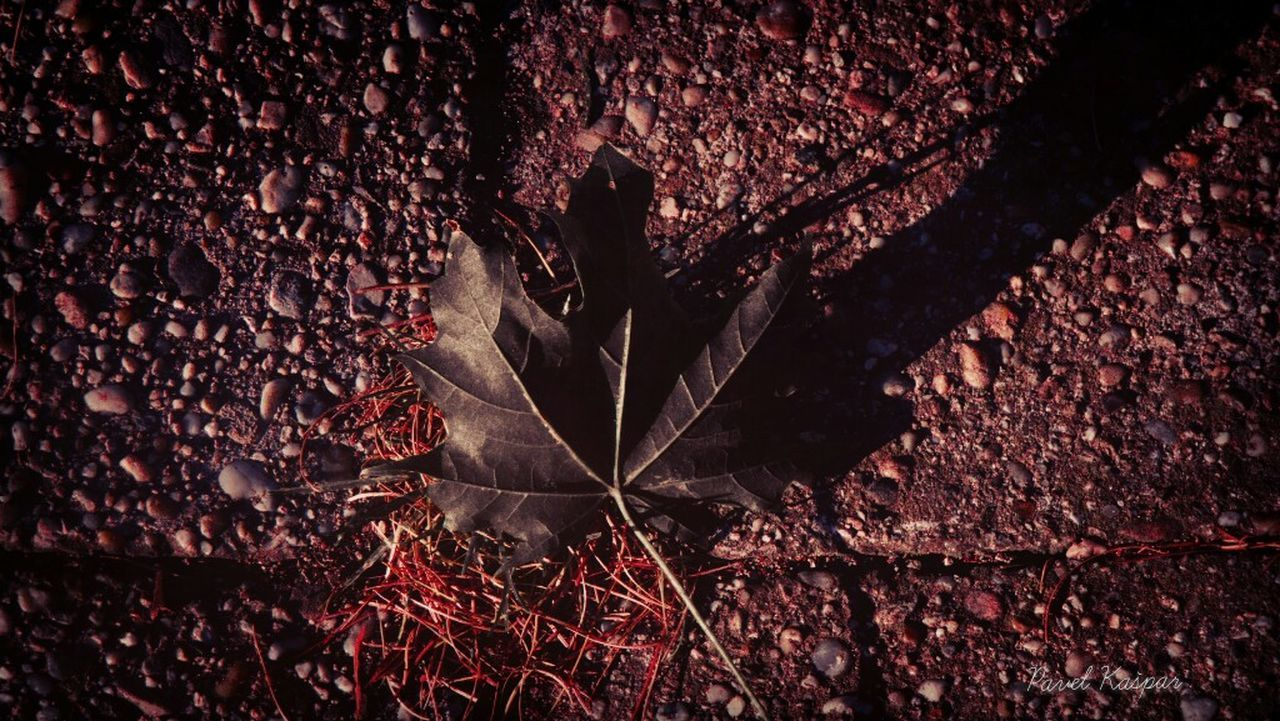 leaf, close-up, autumn, dry, change, season, fragility, fallen, leaf vein, selective focus, natural condition, nature, botany, tranquility, person, outdoors