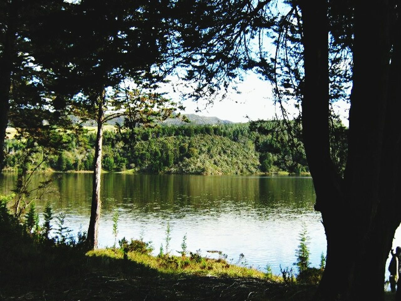 tree, nature, lake, forest, flora, growth, water, reflection, landscape, no people, outdoors, beauty in nature, day