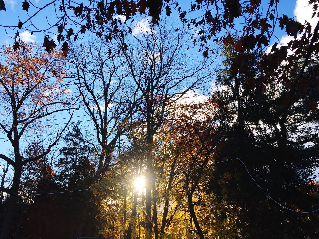 Tree Lens Flare Nature Sunlight Sky Branch Beauty In Nature Autumn Sunbeam Outdoors Bare Tree No People Growth Autumn Low Angle View Tranquility Scenics Day