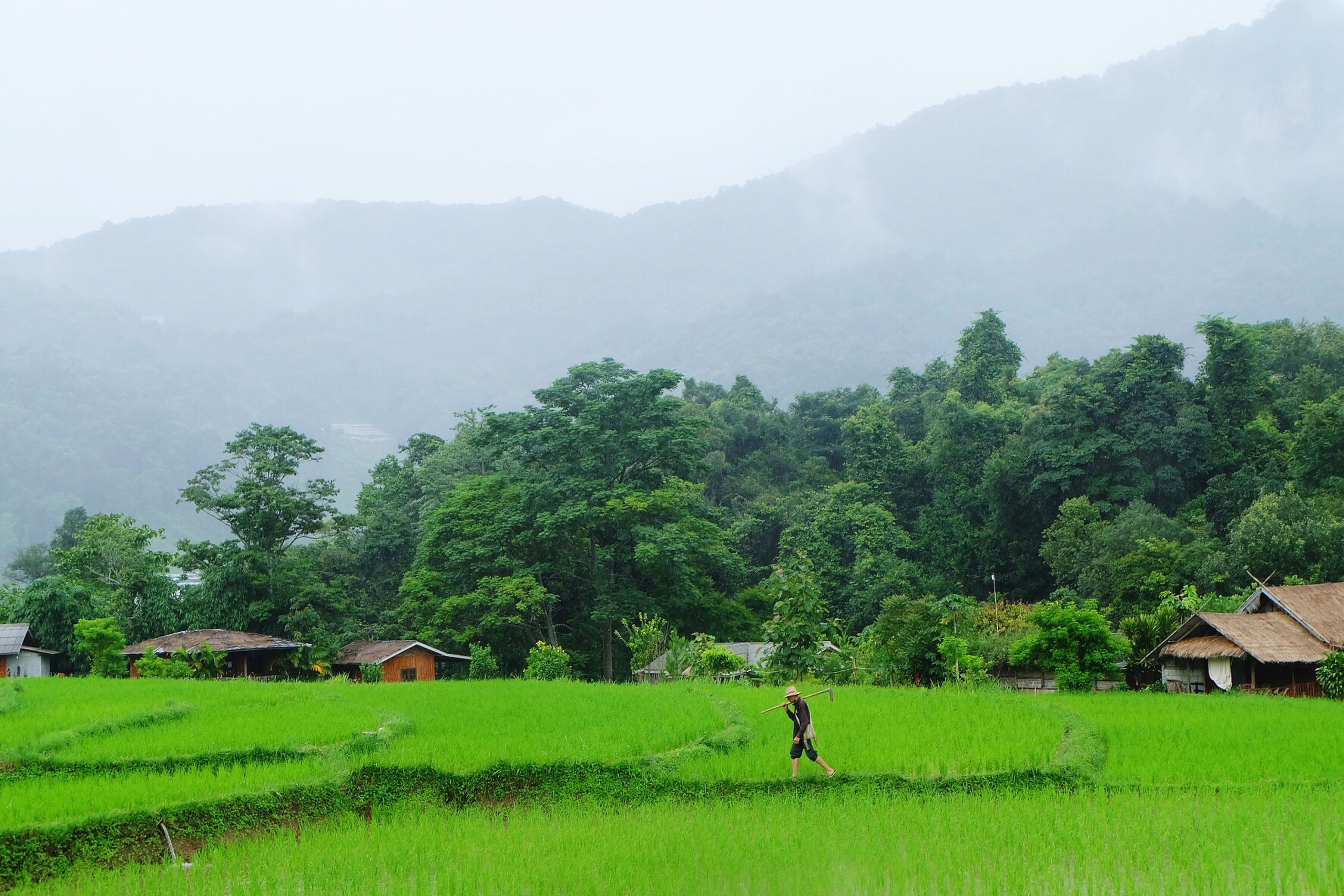 tree, growth, grass, field, scenics, agriculture, tranquility, green color, mountain, landscape, beauty in nature, house, green, nature, tranquil scene, architecture, day, built structure, one person, building exterior, real people, outdoors, men, rural scene, rice paddy, sky, people