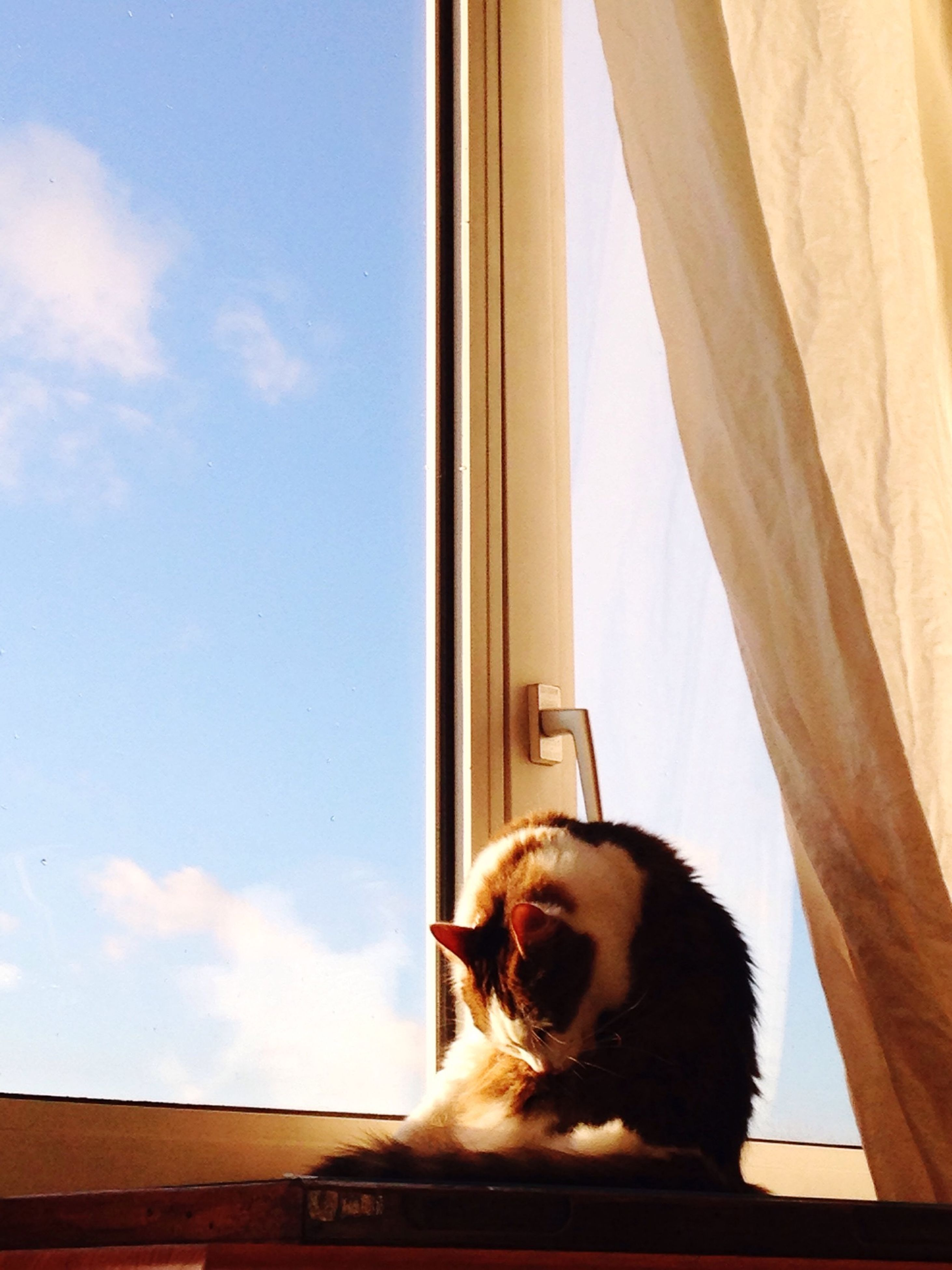 indoors, pets, window, domestic animals, one animal, mammal, animal themes, home interior, one person, domestic cat, sitting, cat, looking through window, glass - material, sky, dog, looking away, low angle view, window sill, side view