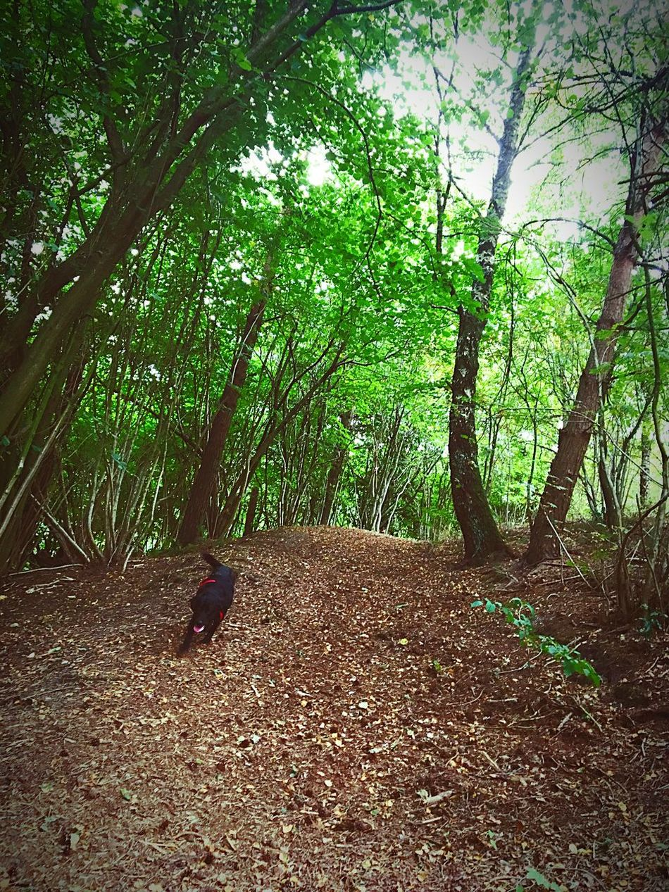 Tree Forest Nature Beauty In Nature Non-urban Scene Day Green Color Danmark No People Dog Love Dog
