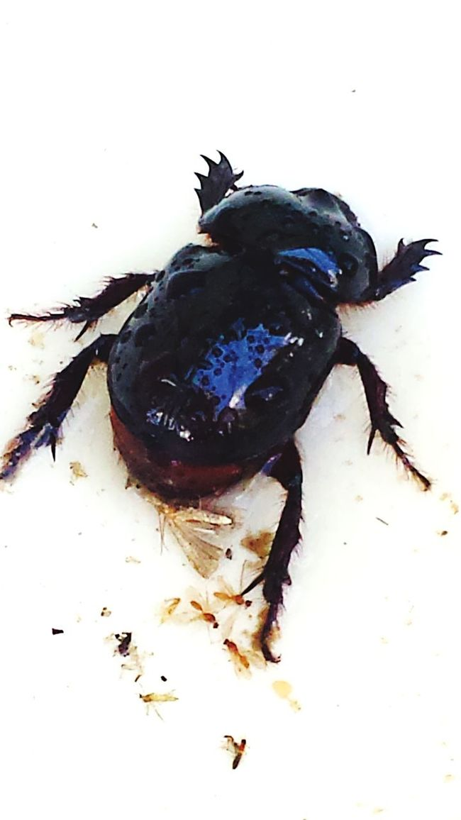 Zoology White Background Bug Brown EyeEm Nature Lovers EyeEm Nature Lover EyeEm Masterclass Check This Out EyeEm Fresh On Eyeem  This Week On Eyeem EyeemShot EyeemPhotos EyeEm Gallery EyeEm Best Shots
