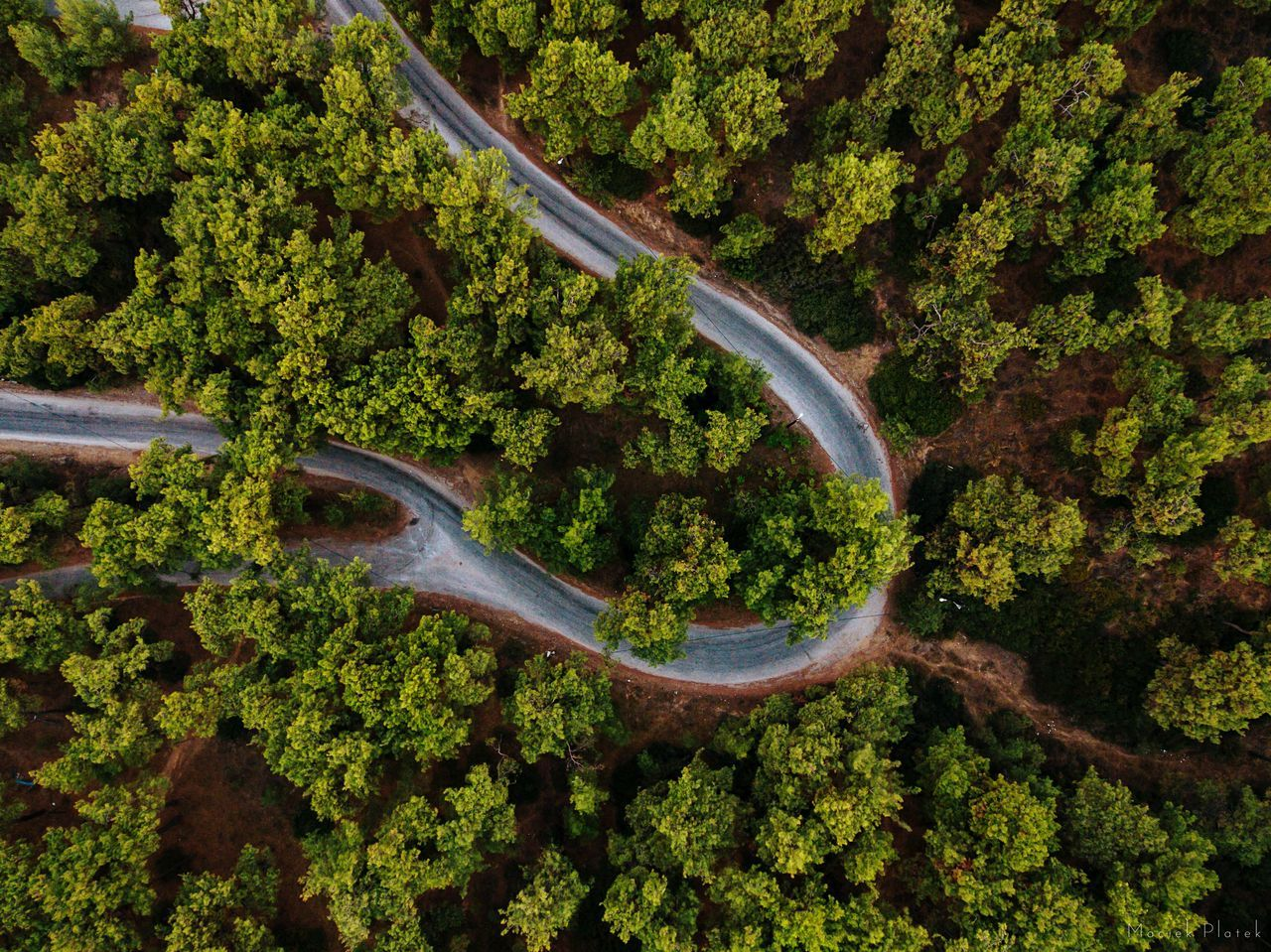 Road trough the forest Green Color Aerial View High Angle View Nature Growth No People Scenics Beauty In Nature Tree Outdoors Day Aerial Photography Drone  Epic Aerial Travel Destinations Tranquility The City Light Flying High