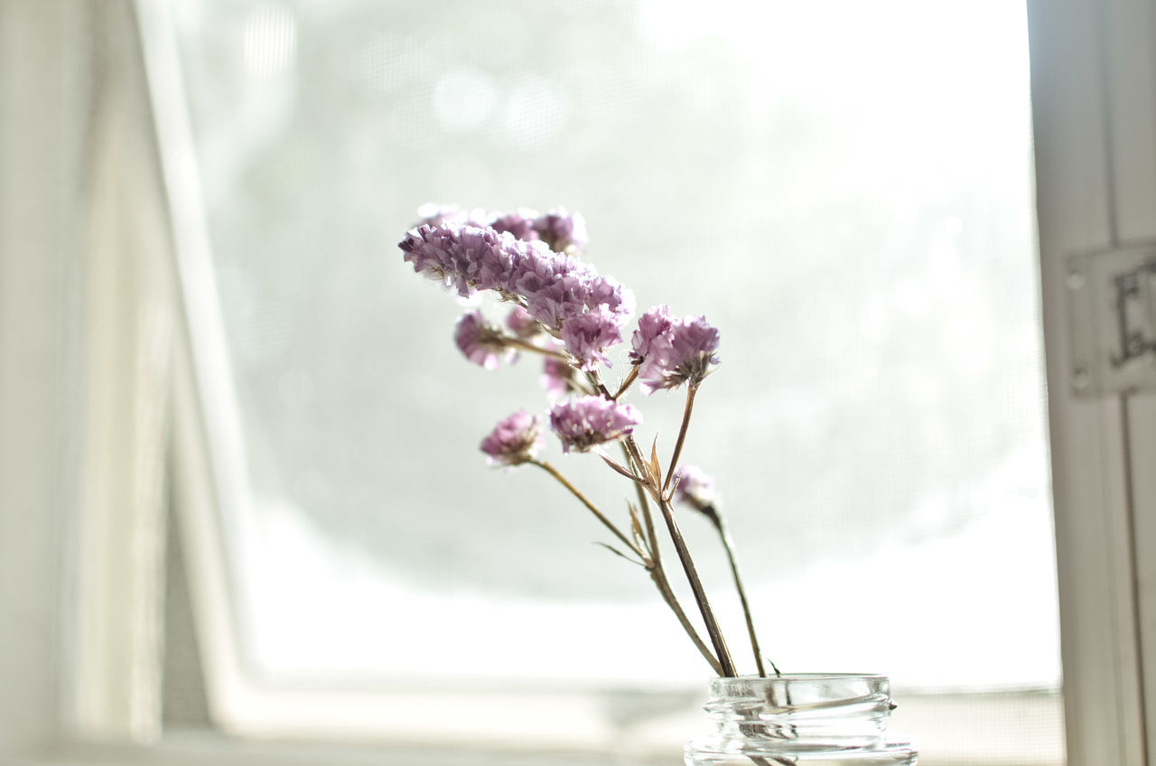 Plant Nature Petal Minimalobsession Minimalism Indoors  Freshness Flower Simplicity Is Beauty. Pink Floral White White Background Close-up Springtime Spring Flowers Morning Sunshine