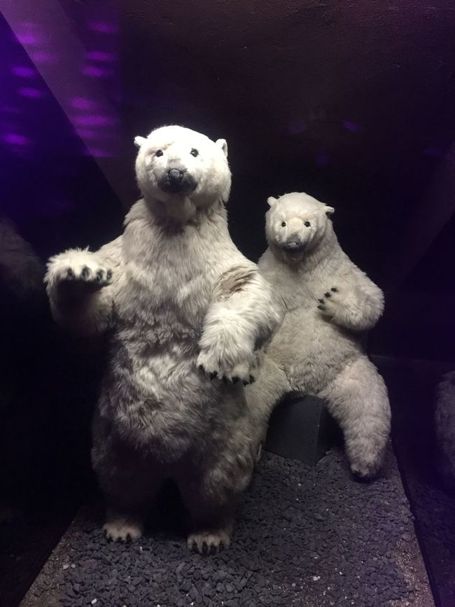 Party Polar Bears Drinks Great Atmosphere Happy New Year Happynewyear Hanging Out