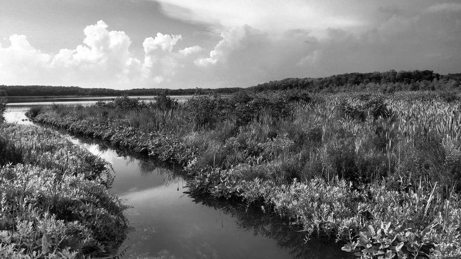 Guernesy Lake Orangeville, Michigan Gun Lake Barry County Water Nature Landscape Tranquility Reflection Sky Lake Rural Scene