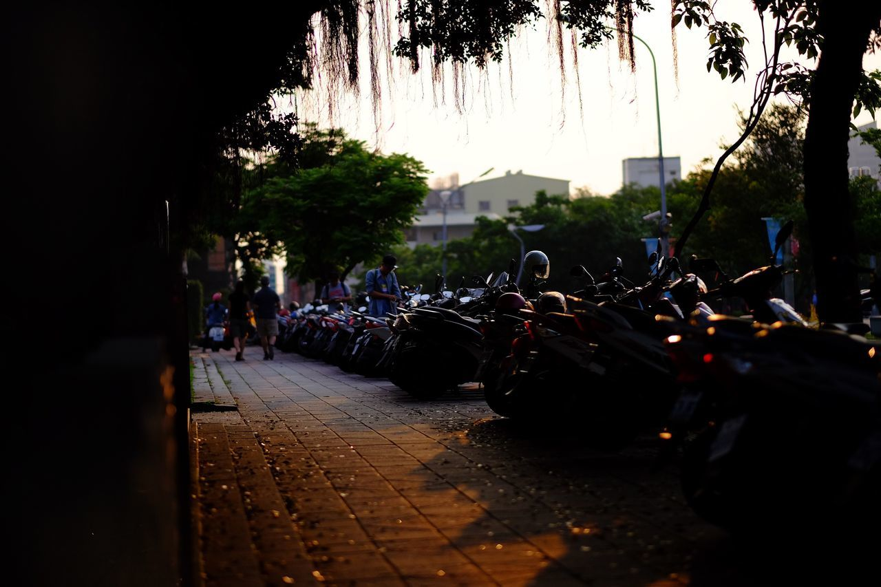 transportation, land vehicle, tree, street, real people, mode of transport, large group of people, outdoors, motorcycle, the way forward, night, men, road, women, sky, people