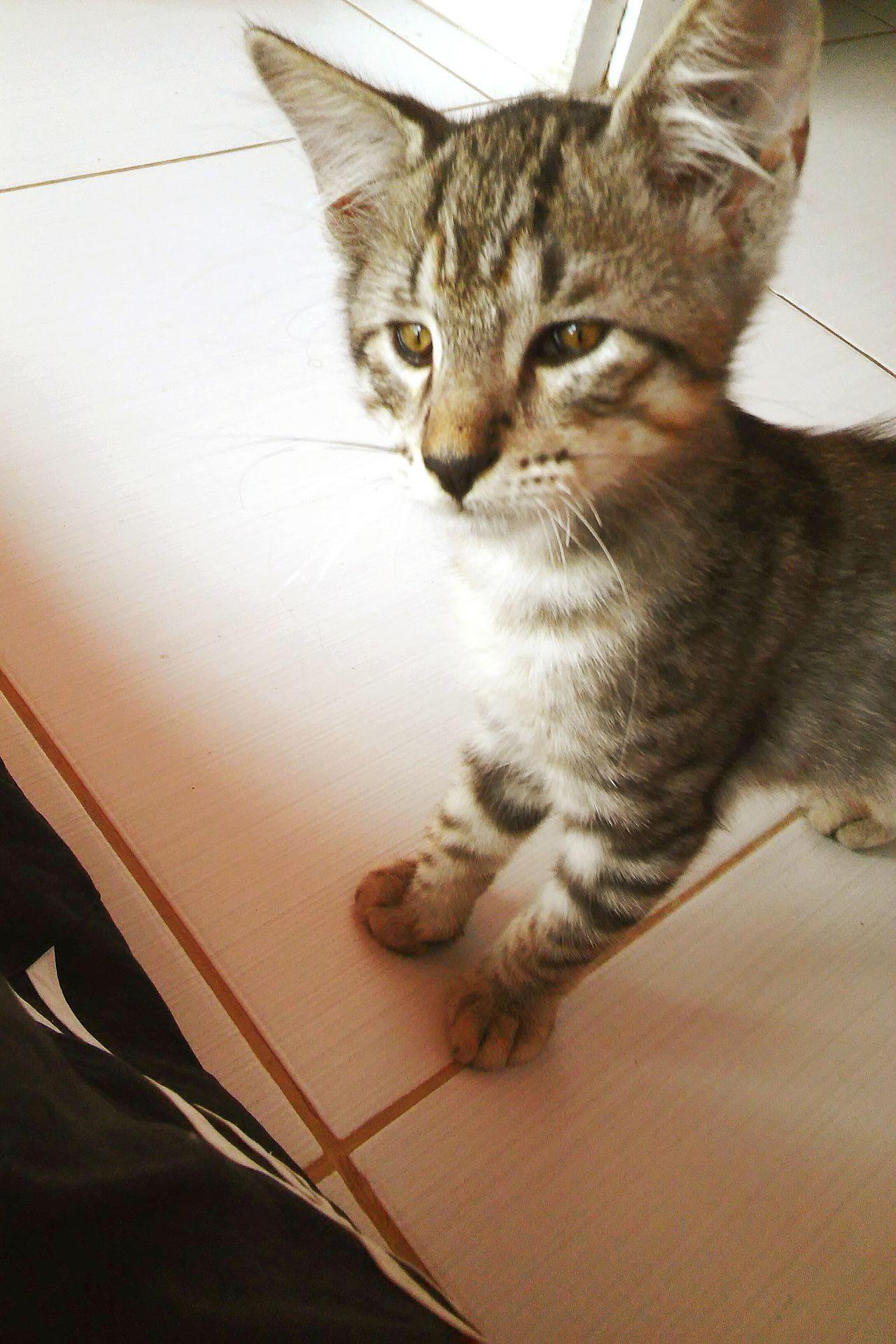 Little Cat Miau Cheese!
