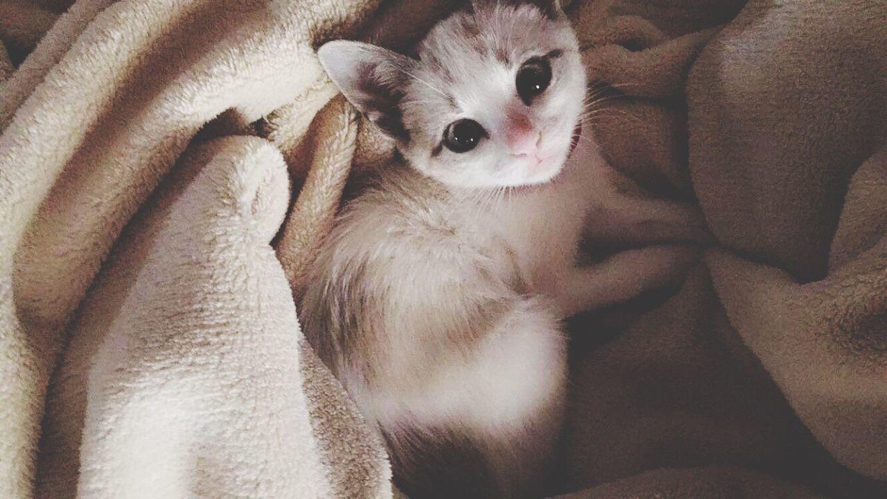 Always Be Cozy Kitten Cat Pet Love
