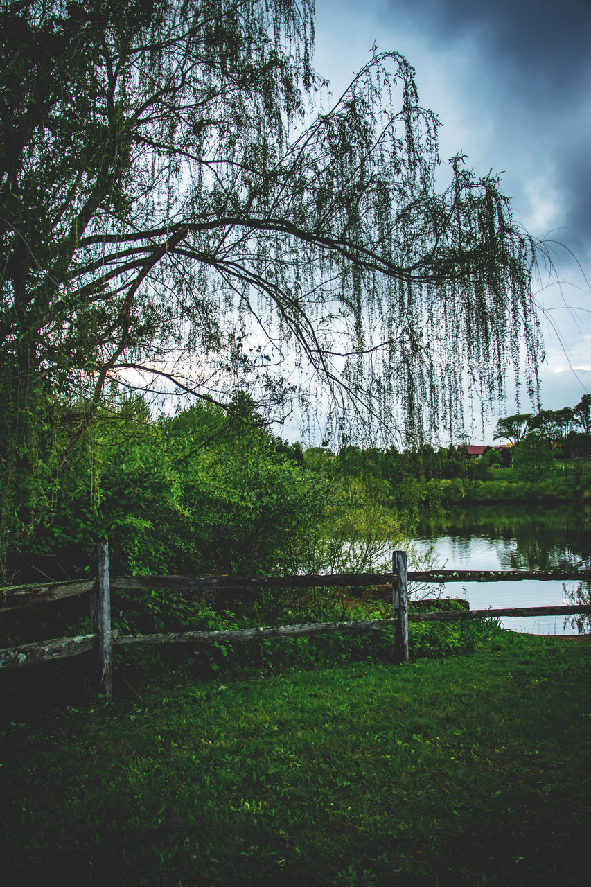 Bare Trees On Lakeshore