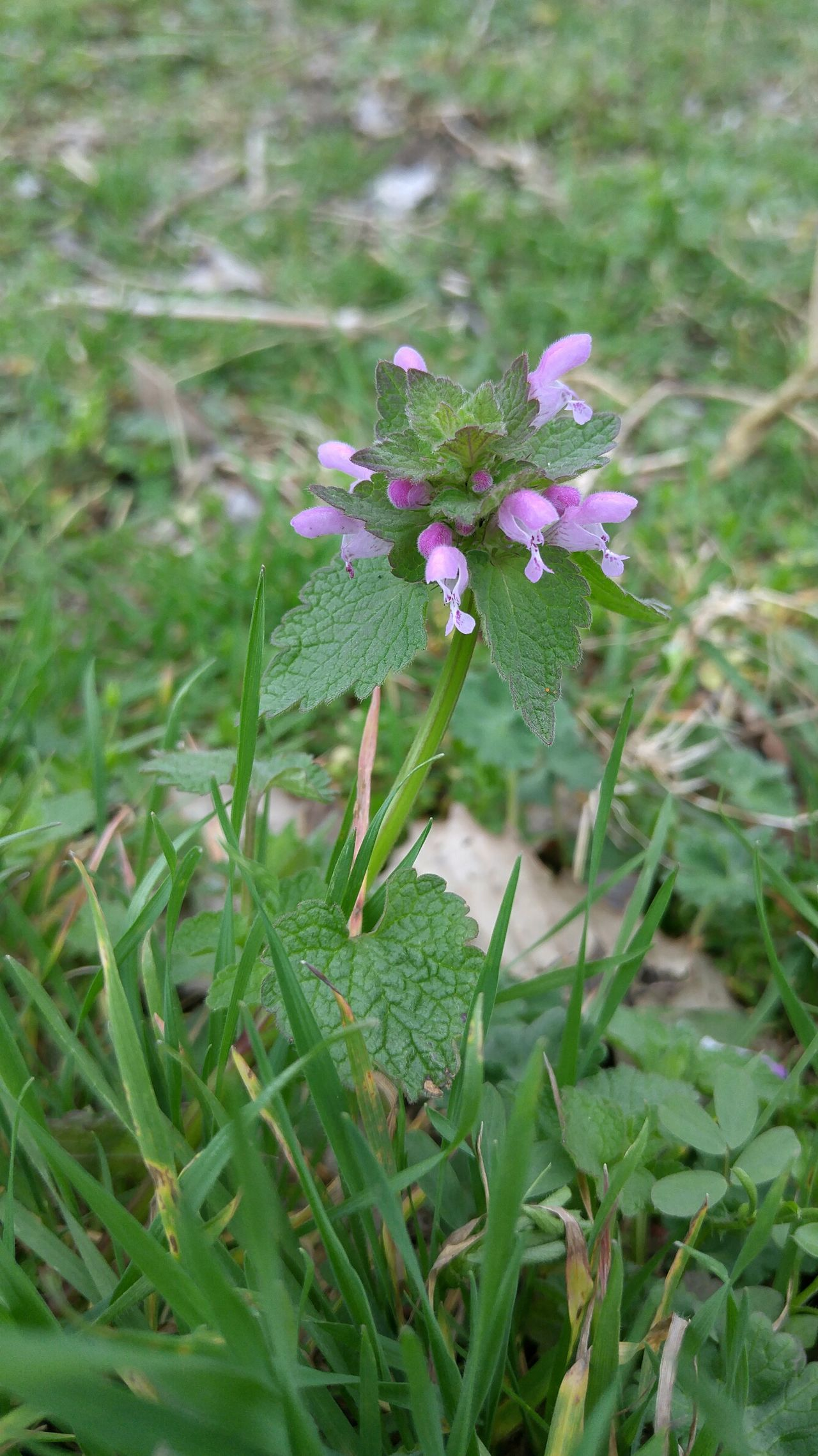 Garden Flower Purple Green Spring New Life Springtime Weeds Are Beautiful Too Grass Fwjphotos Nature Outdoors Nature Photography Lgg4photography LGG4 Hiking Plant