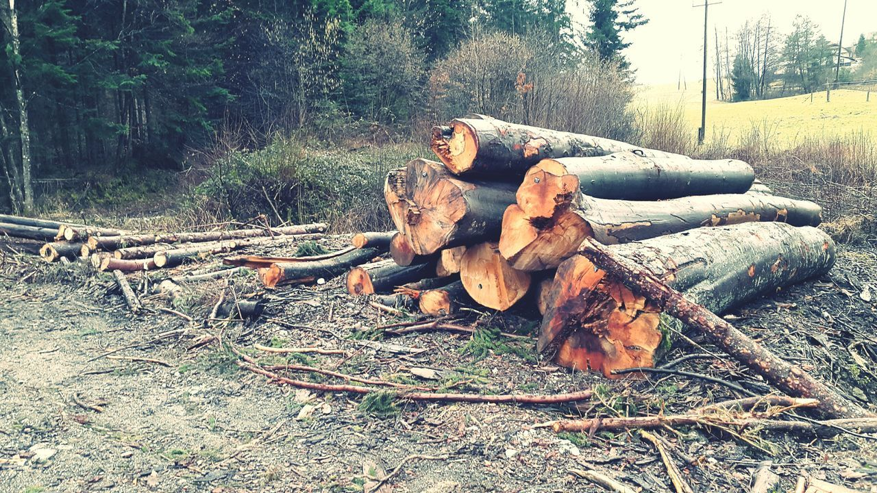 Log Stack On Field Against Trees