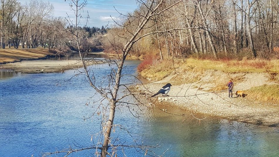 Walking Around The City  Spring In The Sunshine Springtime Spring Day Reflections In The Water Blue Sky Trees And Sky Serene Outdoors Rocks And Water Birds_collection Bird Photography Bird Dogslife