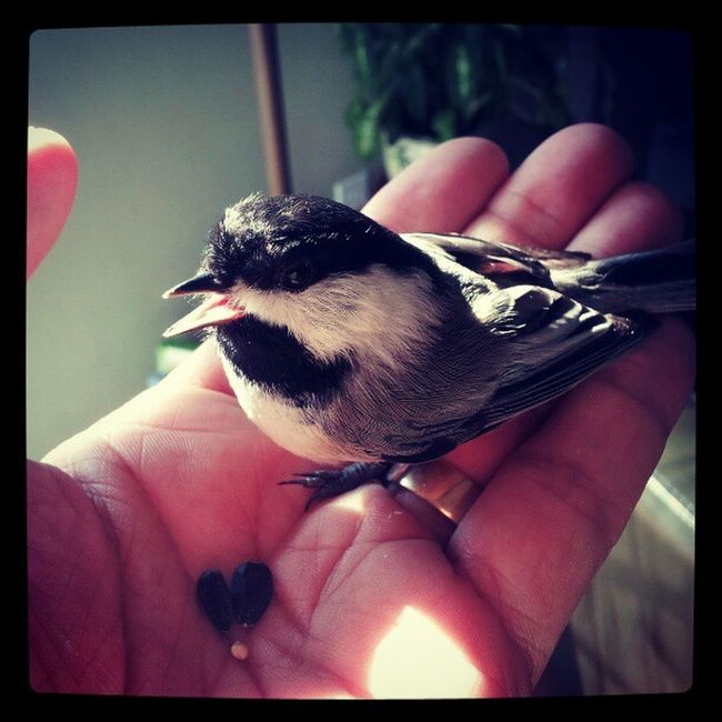 Say hello to Stumpy the Wonder Bird. He only has one foot.