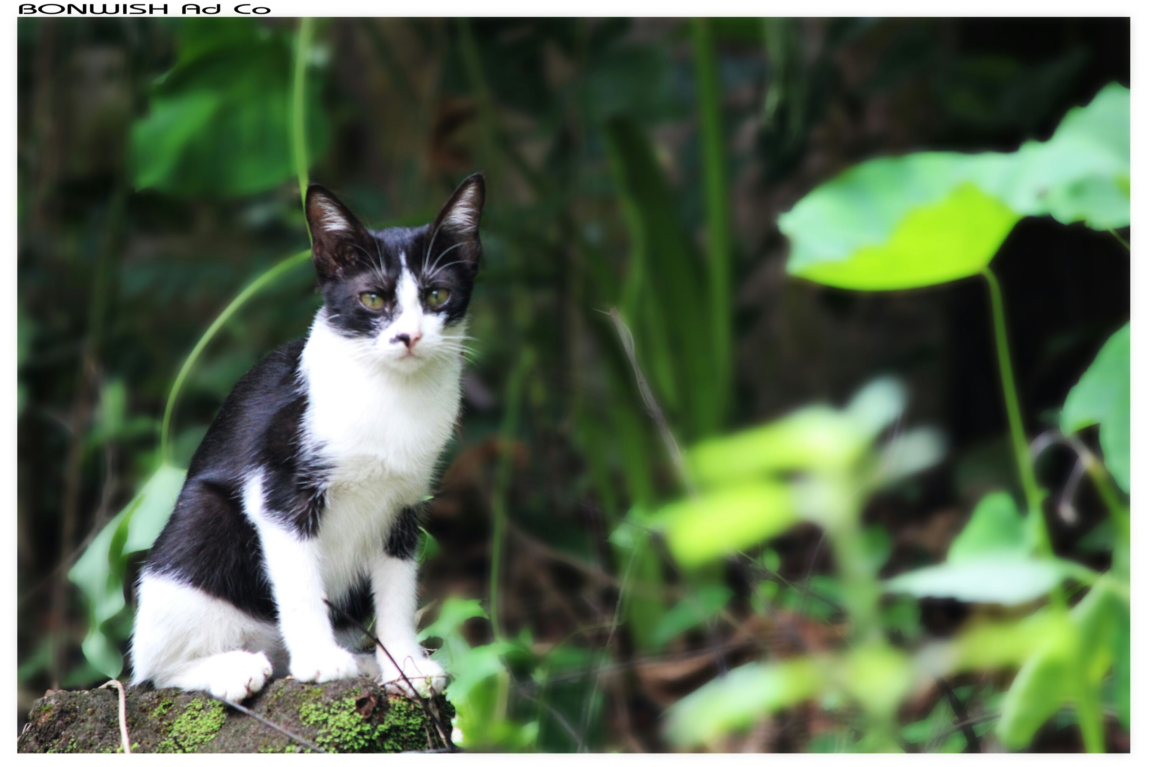 animal themes, domestic cat, one animal, pets, cat, domestic animals, feline, mammal, transfer print, portrait, looking at camera, whisker, auto post production filter, sitting, alertness, staring, focus on foreground, close-up, front view, zoology