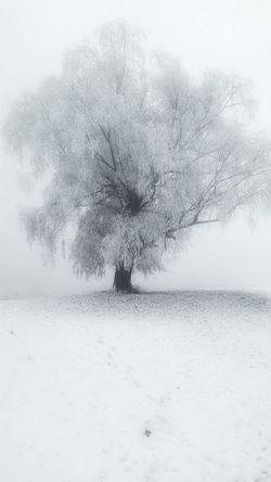 Ice Snow Cold Tree HandyPicture Handymake Handyfotografie Handy Shot Samsung