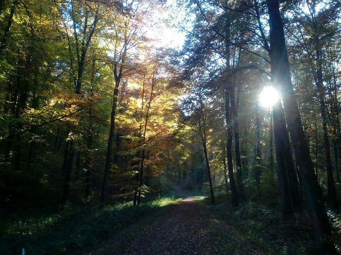 forêt en Normandie