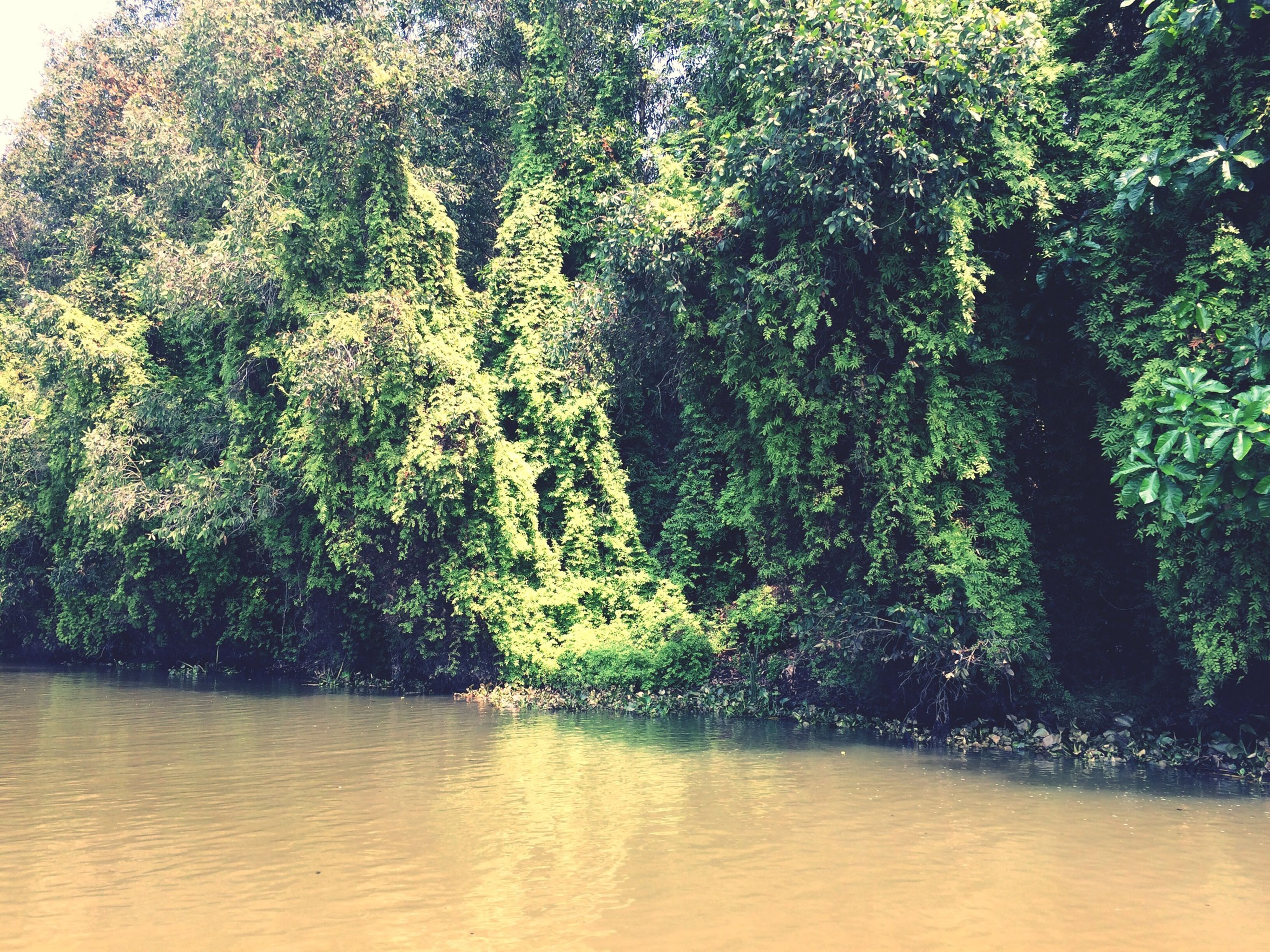 tree, growth, water, waterfront, tranquility, tranquil scene, beauty in nature, nature, scenics, green color, lush foliage, idyllic, no people, outdoors, day, plant, river, branch, lake, sunlight