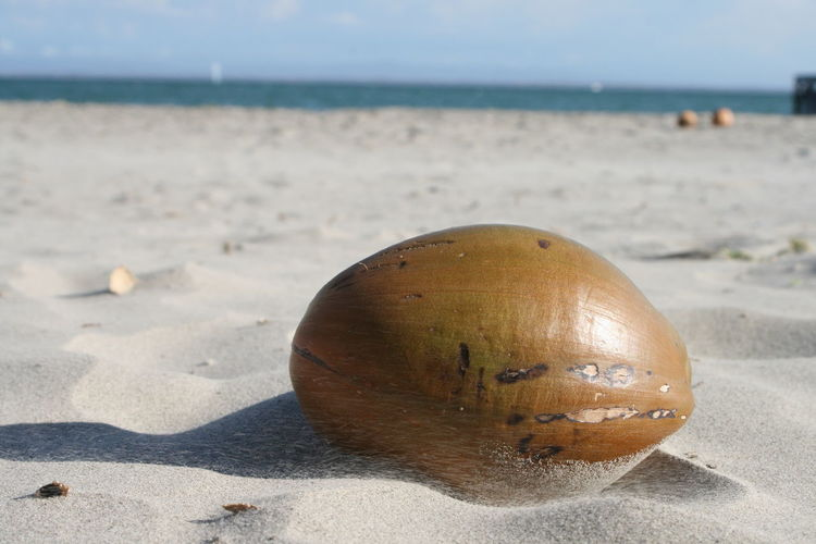 Beach Coconut Horizon Over Water Macro Nature No People Photography In Motion Sand Sea Shore Playa El Yaque