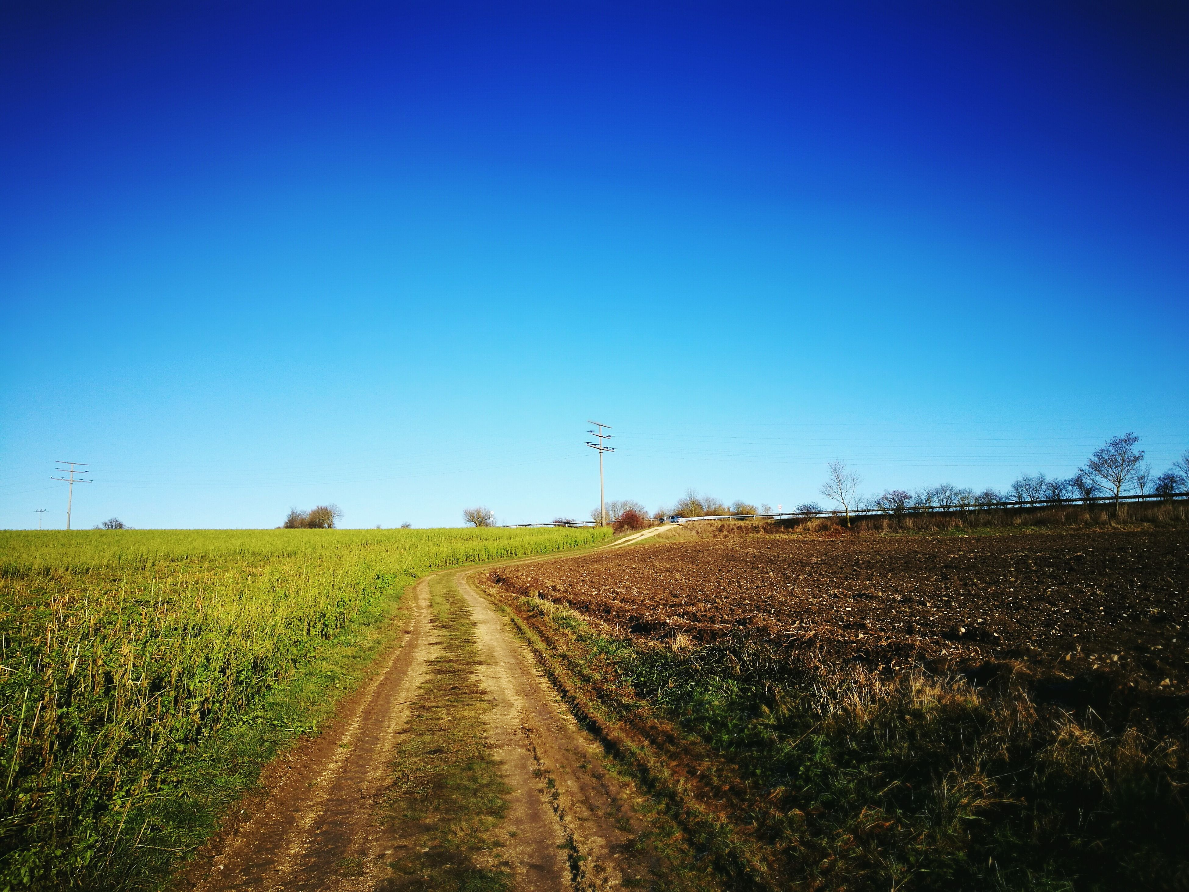 clear sky, agriculture, growth, blue, rural scene, day, nature, field, no people, plant, landscape, outdoors, tranquility, scenics, sky, beauty in nature