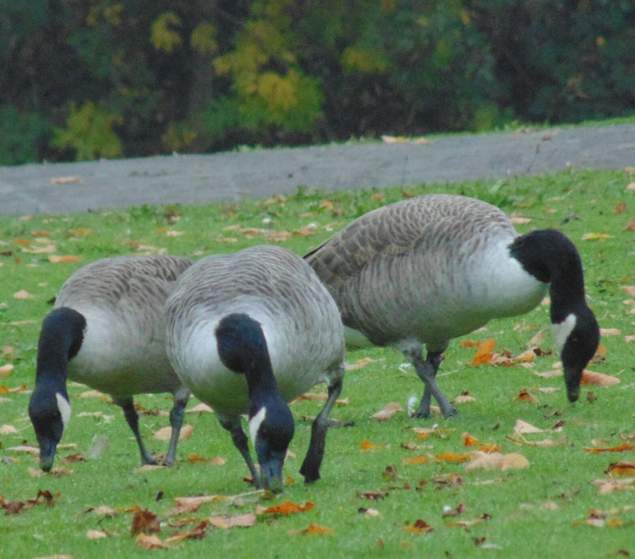 animal themes, bird, animals in the wild, field, nature, animal wildlife, no people, outdoors, day, grass, close-up
