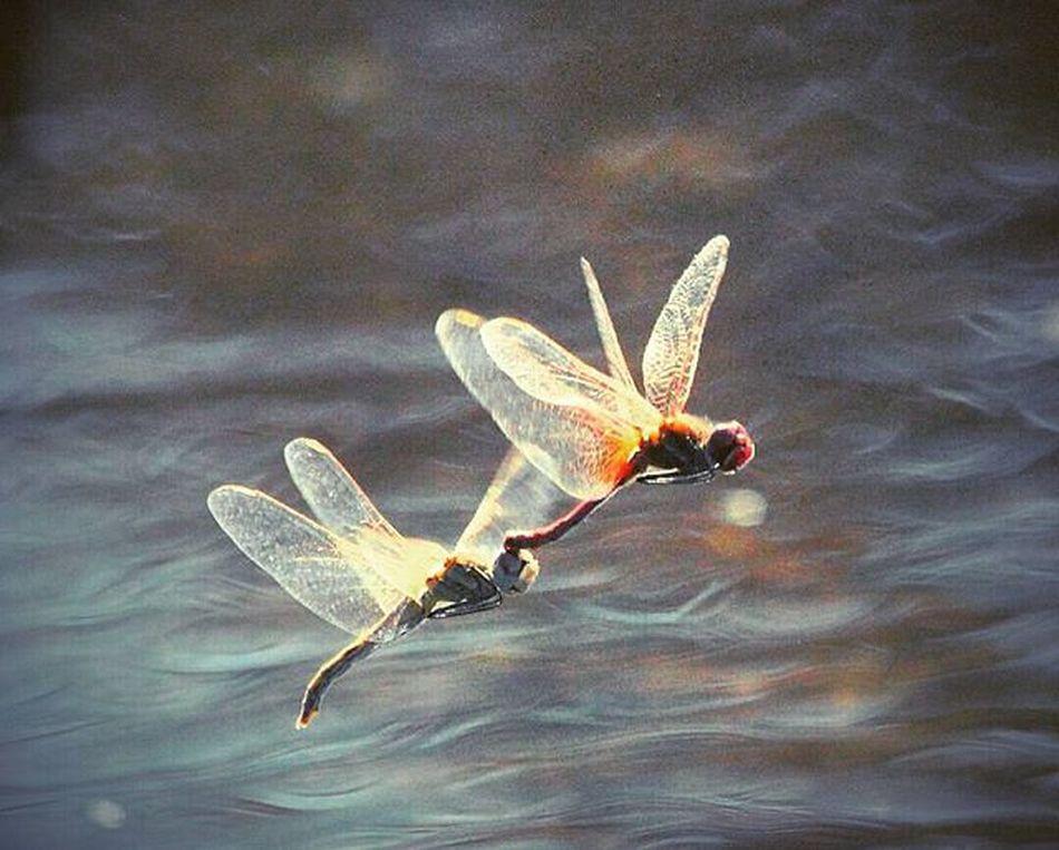 Throughback EndOfSept NEA Ferrystop Slowmotion Vedio Screenshot Taken :) Dragonfly Dnno if dy r Simblings Or Couples Luv Doubletap Loveit PerfectCapture GaneshDaysPic ... Instatravel Instatogetherness :) Yurekaplus