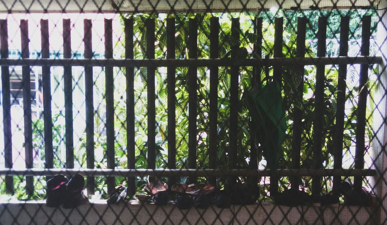 railing, metal, day, animal themes, no people, cage, green color, outdoors, nature, close-up, mammal