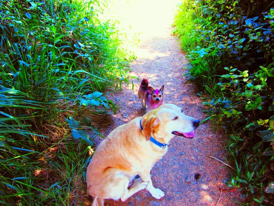 Pets Corner Bestfriends I Love My Dog Doggy Love Trails Dog Walking Following The Path... A Day At The Park Puppy Love My Dogs Are Cooler Than Your Kids