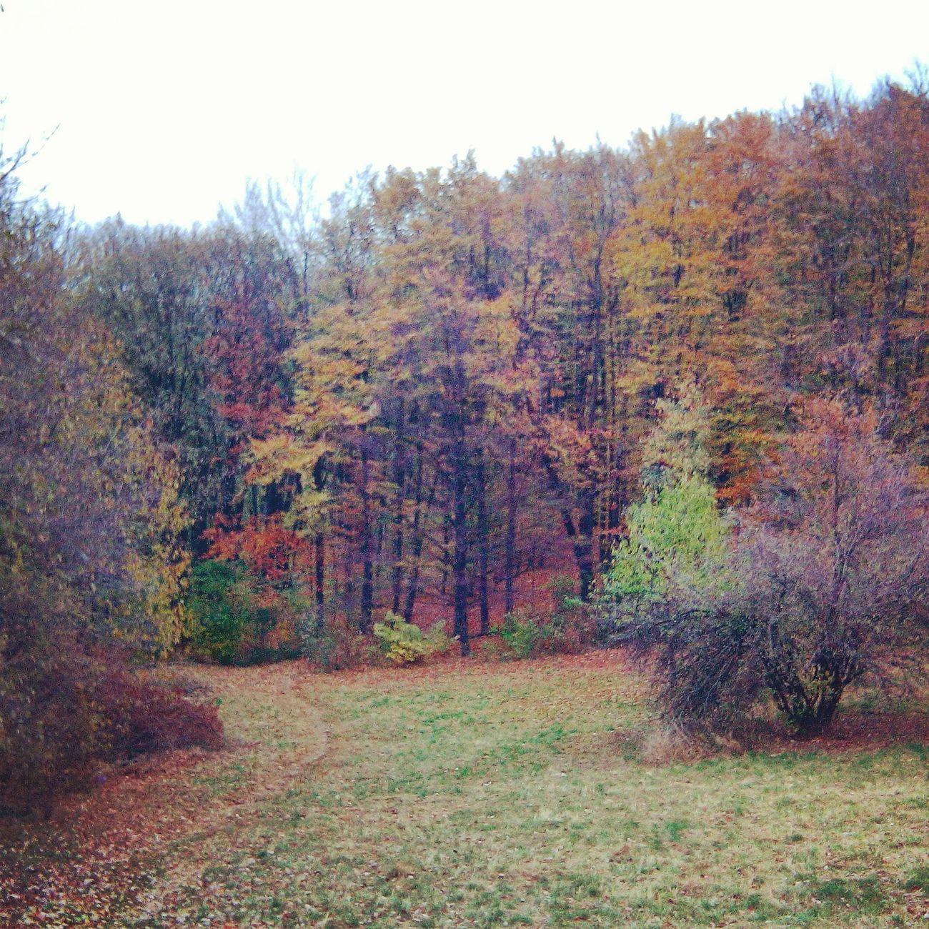 Autumn Colors Hello World Walking Around Enjoying Life