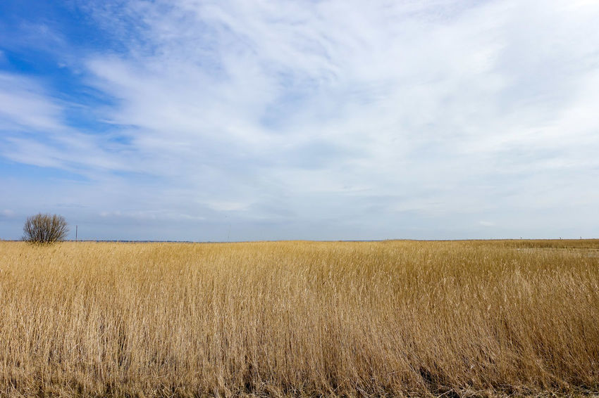 Ostsee Cereal Plant Cloud - Sky Cornfield Landscape Sky